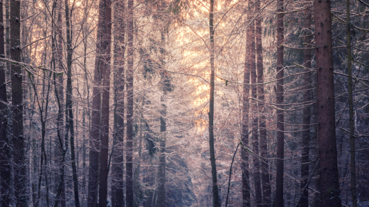 Picture no: 12033352 Winterlicher Wald Created by: luxpediation