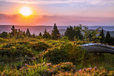 Picture no: 12045146 Panorama bei Sonnenaufgang im Schwarzwald Created by: KundenNr-160338