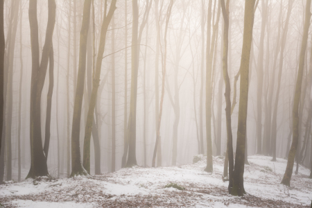 Picture no: 12045851 Winterwald im Nebel Created by: luxpediation