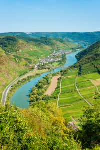 Picture no: 12051544 Mosel bei Ediger-Eller 34 Created by: Erhard Hess