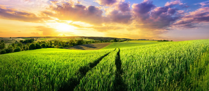 Picture no: 12051882 Vast green field at gorgeous sunset Created by: Smileus