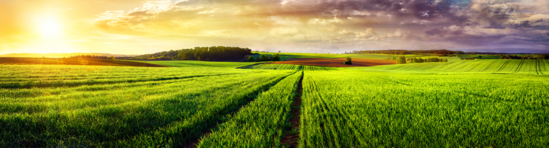 Picture no: 12054609 Rural landscape sunset panorama Created by: Smileus