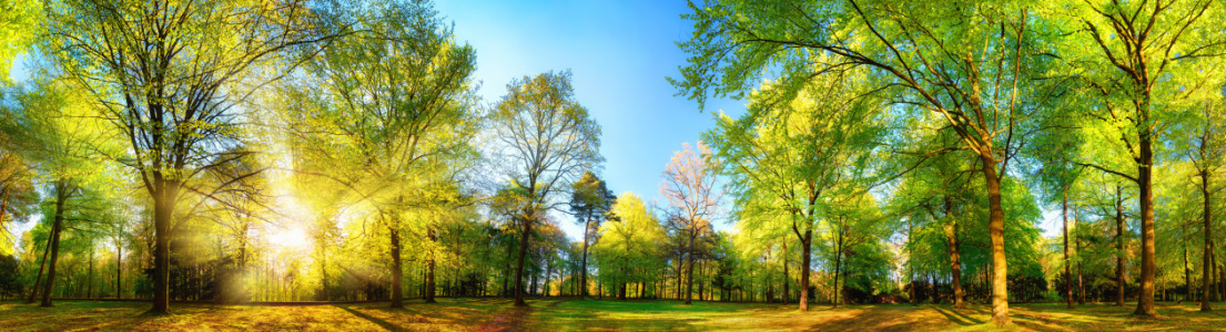 Picture no: 12055720 Gorgeous panoramic spring scenery with sunlit tree Created by: Smileus