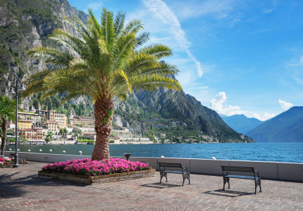 Picture no: 12060520 Palme am Seeufer Limone Gardasee Italien Created by: SusaZoom