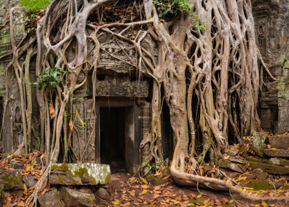 Picture no: 12063017 Ta Prohm Tempel - Kambodscha Created by: orxy