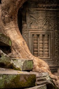Picture no: 12063022 Ta Prohm Tempel - Kambodscha Created by: orxy