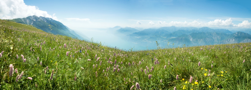 Picture no: 12099479 Bergwiese Monte Baldo Italien Created by: SusaZoom