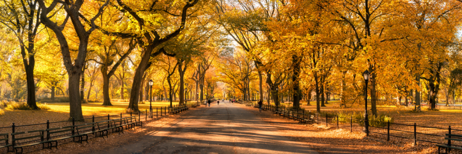 Picture no: 12099809 Central Park in New York City Created by: eyetronic
