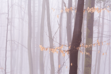 Picture no: 12106260 Wald im Nebel Created by: luxpediation