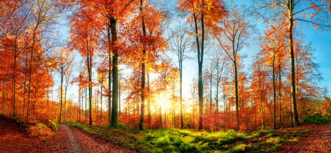 Picture no: 12107439 Herbstlandschaft Panorama bei Sonnenuntergang Created by: Smileus