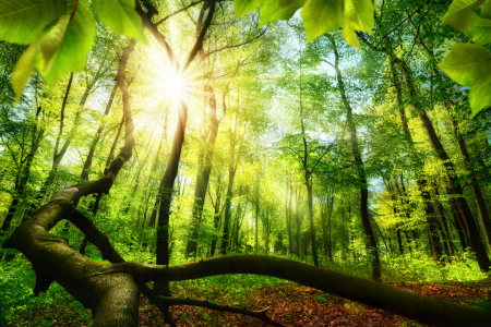Picture no: 12108869 Green forest with bright beautiful sun beams Created by: Smileus