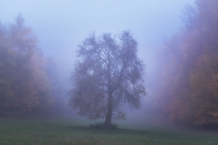 Picture no: 12125369 Baum im Herbstnebel Created by: luxpediation