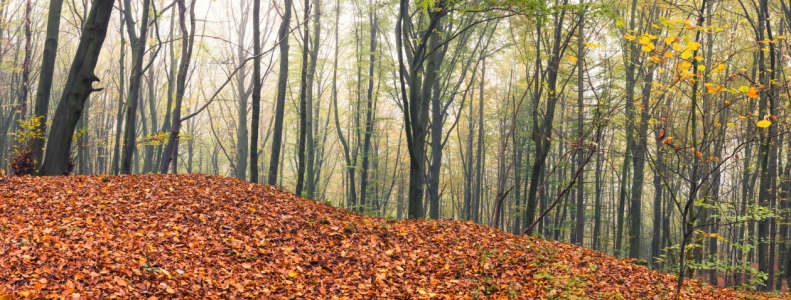 Picture no: 12127045 Herbstlicher Wald im Panorama Created by: luxpediation