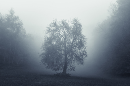 Picture no: 12132552 Magical Tree - Baum im Nebel Created by: luxpediation