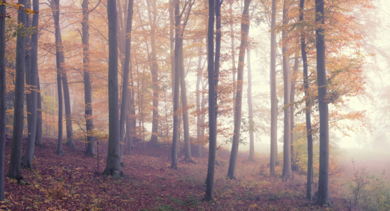 Picture no: 12150189 Wald im Nebel Created by: luxpediation