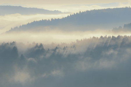Picture no: 12152686 Wälder im Nebel Created by: falconer59