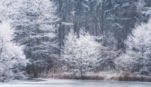 Picture no: 12160763 Frost am See  Created by: luxpediation