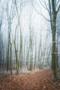 Picture no: 12175628 Weg im frostigen Winterwald Created by: luxpediation