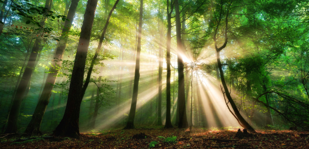 Picture no: 12227523 Sonnenstrahlen im nebligen Wald Created by: Smileus