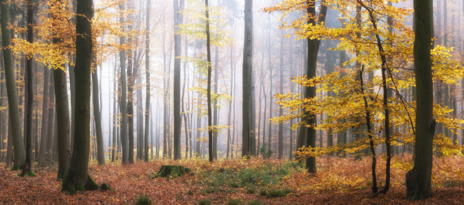 Picture no: 12244243 Nebliger Morgen im Wald Created by: luxpediation