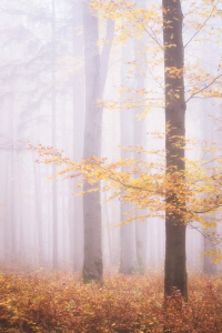 Picture no: 12255752 Herbstwald im Nebel Created by: luxpediation