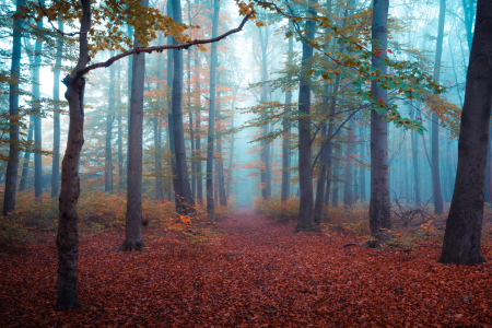 Picture no: 12258053 Herbst im Wald Created by: Martin Wasilewski