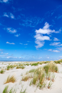 Picture no: 12258408 Dünen und Strand Created by: DirkR
