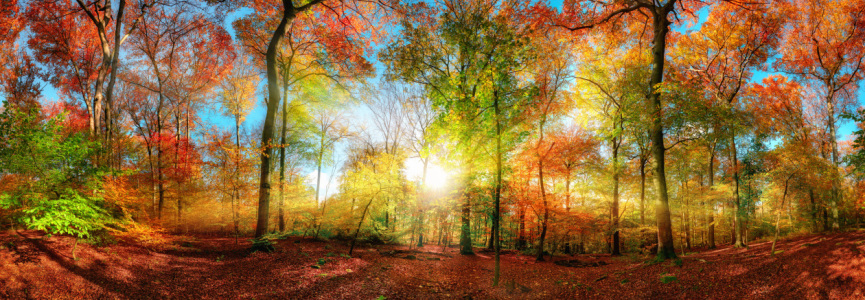 Picture no: 12260092 Farbenfrohes Waldpanorama mit Sonne im Herbst Created by: Smileus