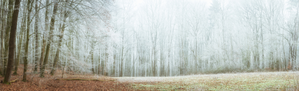 Picture no: 12270148 Frost im Wald  Created by: luxpediation