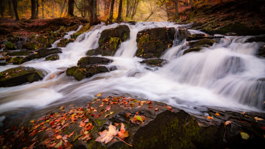 Picture no: 12286278 Selkefall im Harz Created by: Martin Wasilewski