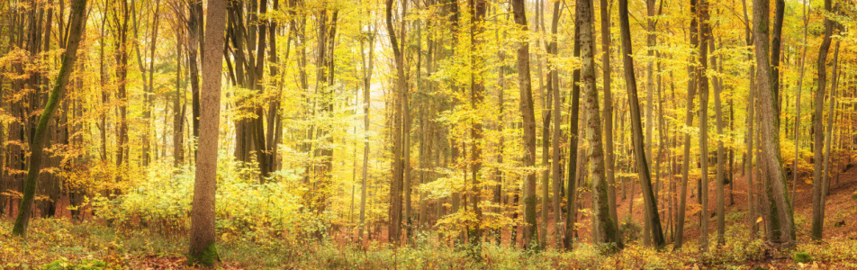 Picture no: 12289689 Herbstlicher Laubwald im Licht Created by: luxpediation