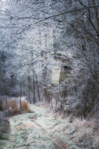 Picture no: 12290182 Frost am Waldweg Created by: luxpediation