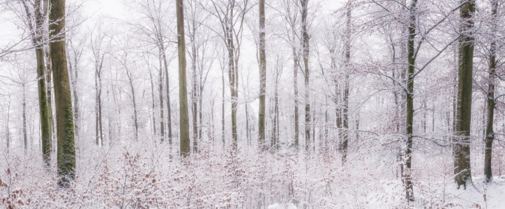 Picture no: 12306537 Winterwald Created by: luxpediation