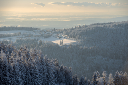 Picture no: 12359574 Sankt Englmar Bayerischer Wald Created by: Gregor Handy