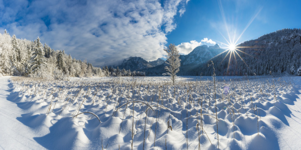 Picture no: 12366882 Schwansee im Winter Created by: Walter G. Allgöwer