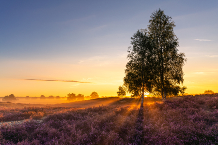 Picture no: 12392793 Sonnenaufgang in der Heide Created by: PH-Photography