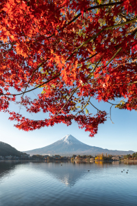 Picture no: 12413812 Berg Fuji im Herbst Created by: eyetronic