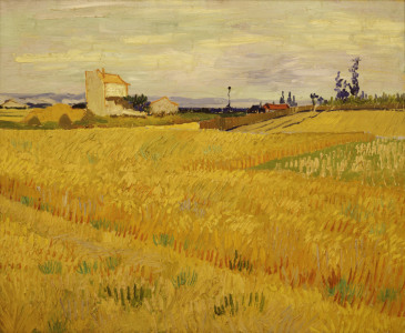 Picture no: 30002856 Van Gogh / Cornfield / c.1888 Created by: van Gogh, Vincent