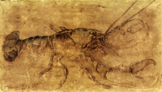Picture no: 30003036 Lobster / Drawing by Dürer Created by: Dürer, Albrecht
