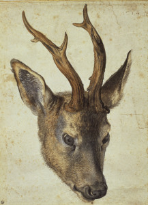 Picture no: 30003046 A.Dürer, Head of a Roebuck / Draw./1514 Created by: Dürer, Albrecht