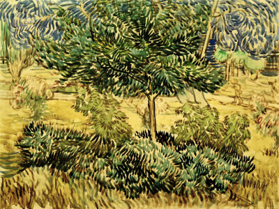 Picture no: 30003130 v.Gogh, Tree a.Bushes in Asylum Garden Created by: van Gogh, Vincent