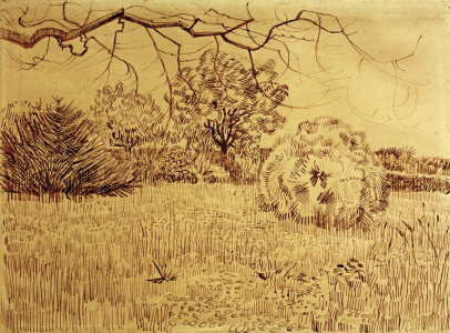 Picture no: 30003236 V.v.Gogh, Field w.Shrub / Drawing / 1888 Created by: van Gogh, Vincent