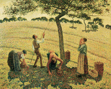 Picture no: 30006290 Pissarro / The Apple Harvest Created by: Pissarro, Camille