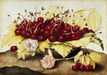 Picture no: 30009096 G.Garzoni / Cherries and carnations. Created by: Garzoni, Giovanna