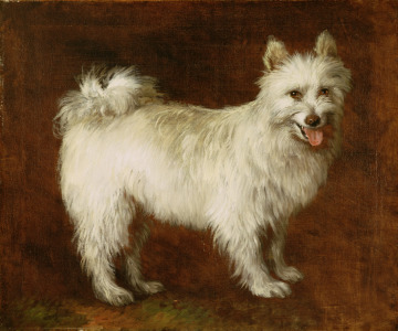 Picture no: 31000448 Spitz Dog, c.1760-70 Created by: Gainsborough, Thomas