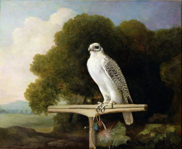 Picture no: 31001429 Greenland Falcon , 1780 Created by: Stubbs, George