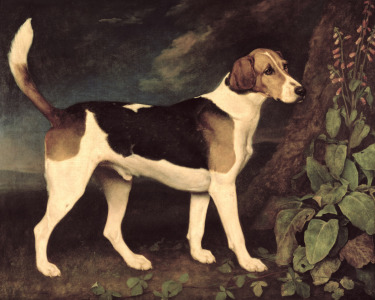 Picture no: 31001431 Ringwood, a Brocklesby Foxhound, 1792 Created by: Stubbs, George