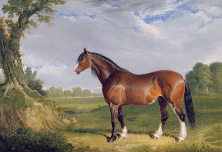Picture no: 31001583 A Clydesdale Stallion, 1820 Created by: Herring Snr, John Frederick