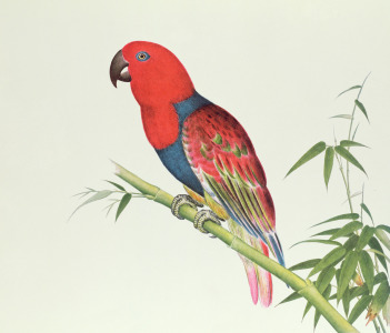Picture no: 31001800 Electus Parrot, on a bamboo shoot, Ch'ien-lung period Created by: Anonyme Künstler