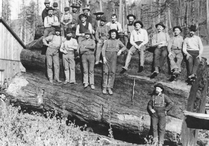 Picture no: 31001882 Woodcutters in California, 1891 Created by: Unbekannte Fotografen